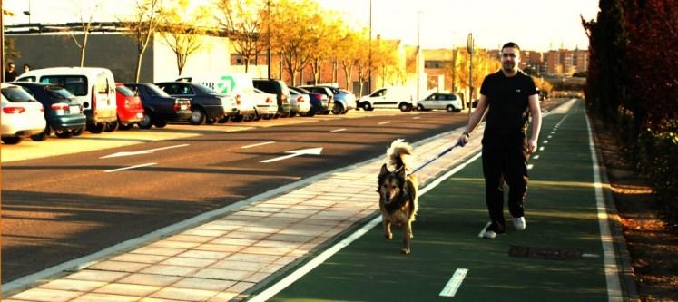 Llevar mascotas en el auto