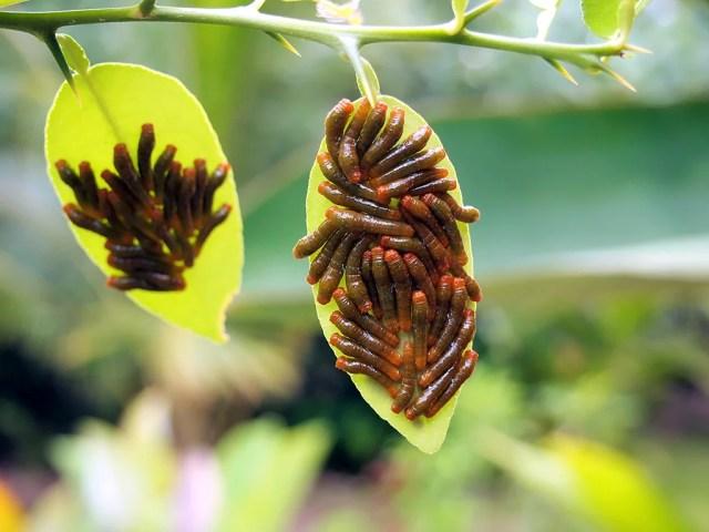 4 plagas que se comerán las raíces de tus plantas y cómo eliminarlas