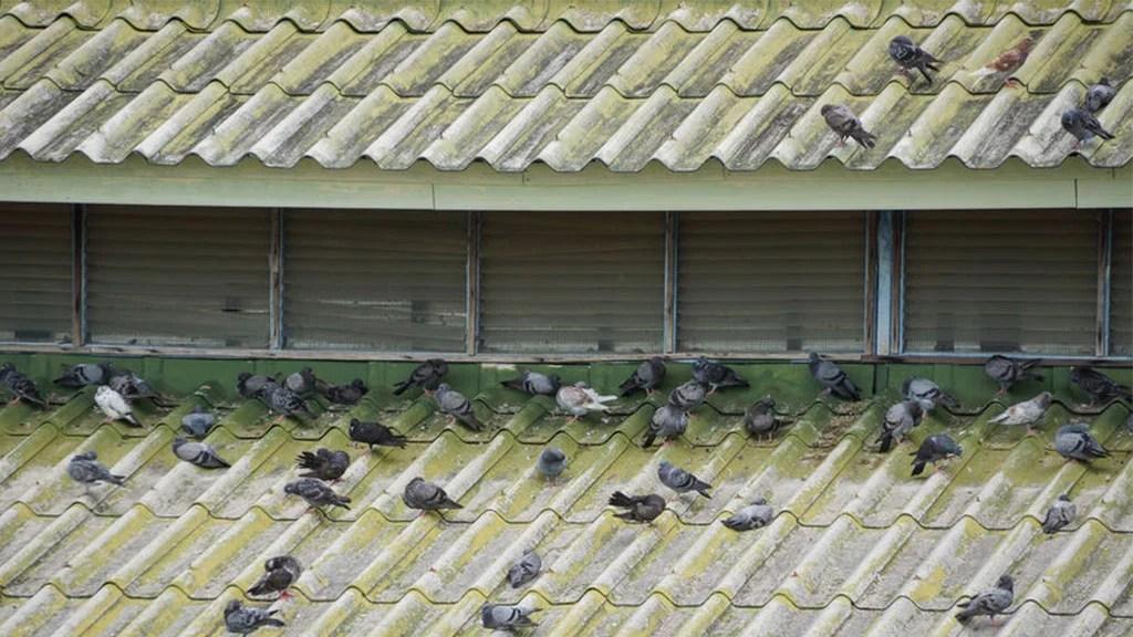 Como ahuyentar a las aves sin eliminarlas