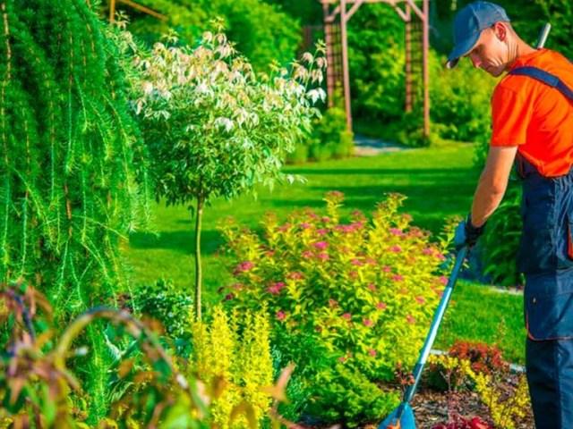 Conoce que debe de ofrecerte un servicio de jardineria