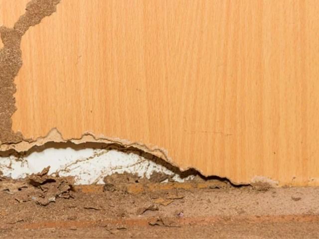 Que hacer si tienes termitas en tu casa