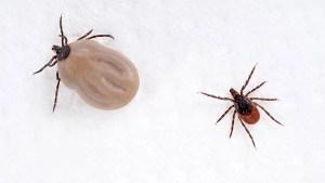 Descubre con cuántos insectos compartes hogar