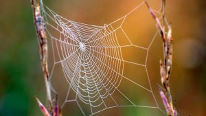 5 arañas que aparecen en septiembre