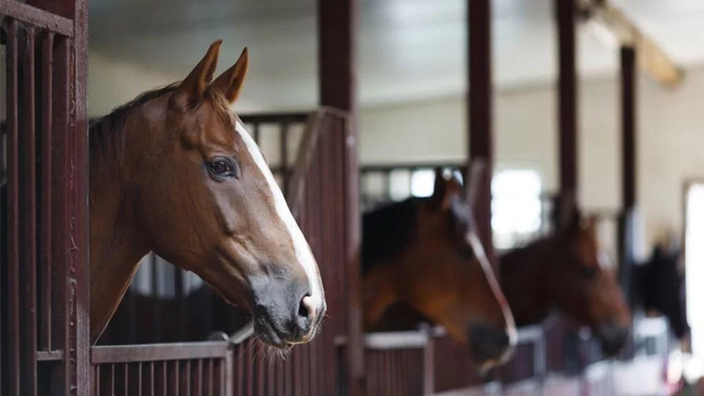 Cómo quitar las garrapatas de los caballos