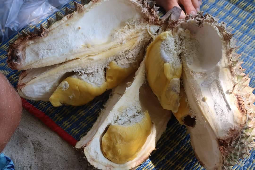 Otvoren durian