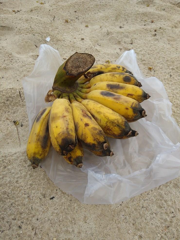 Divlje banane