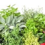 Lekovito bilje