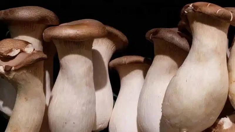 Health Benefits Of Raw Mushrooms - www.detoxandcure.com
