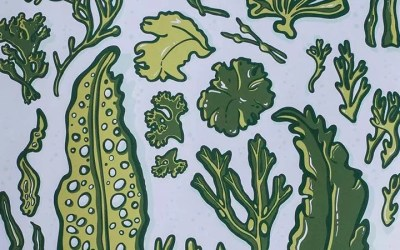 What's The Story Behind Bladderwrack and Seamoss?