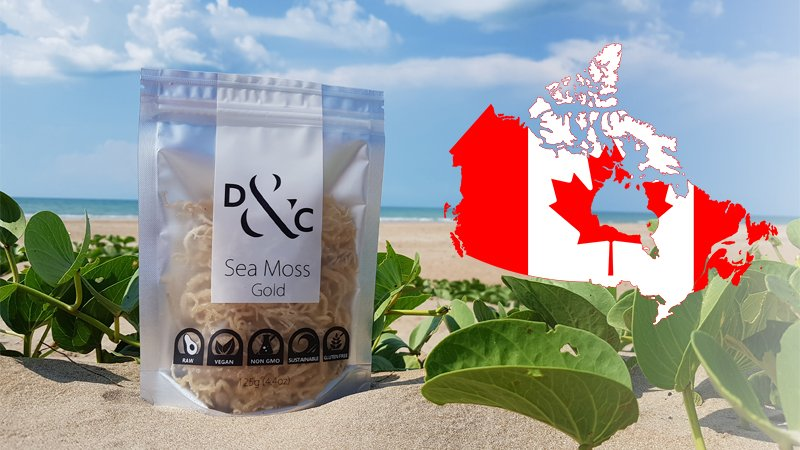 Buying-Sea-Moss-in-Canada-Sea-Moss-Gold. Detox & Cure Sea Moss Gold 125g bag on the golden sands of a sunny beach with a stylized map of Canada showing the Canadian Flag within the borders of the country