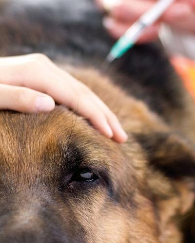 Dog Scratching But No Fleas