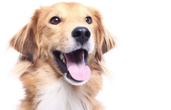 The Biggest Challenge of Adopting Rescue Dogs