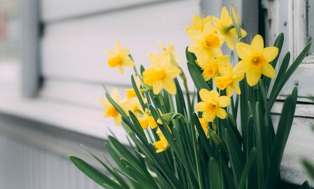 5 Best Early Spring Blooming Flowers