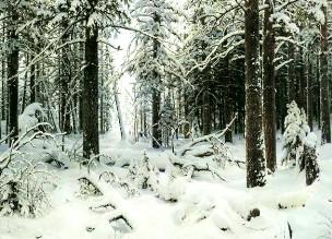 Описание картины И. И. Шишкина «Зима»