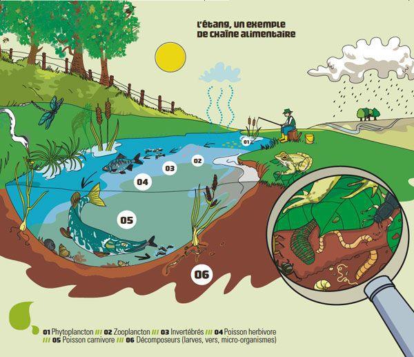 Un exemple de chaîne alimentaire.Alimentation saine : L'alimentation est à considérer dans sa globalité et l'eau y la source de vie.
