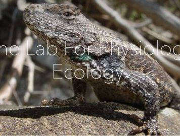 PhD Opportunity in Animal Physiology and Community Ecology – Illinois