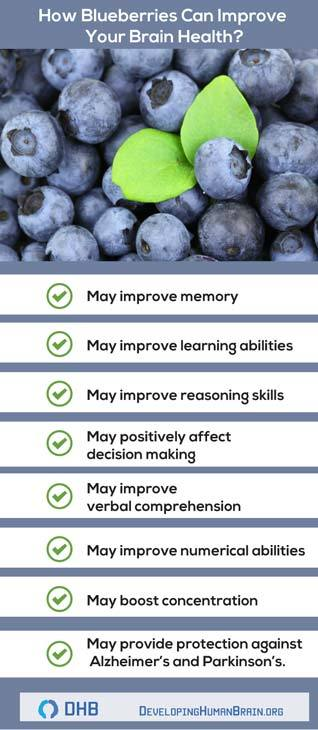 blueberries for brain infographic