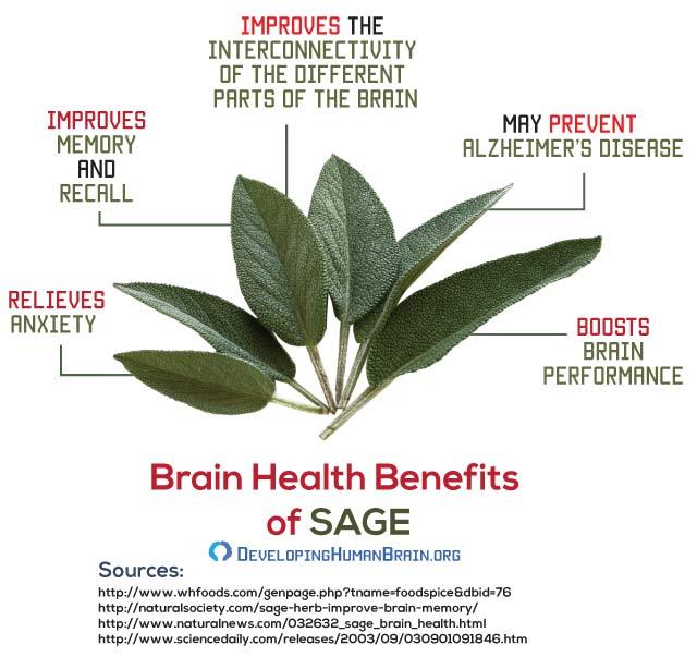 brain food sage