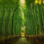 Le Japon, une adresse d'aventure et culturelle