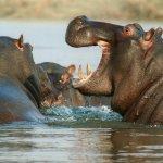 Top 3 des parcs pour faire du safari en Afrique du Sud