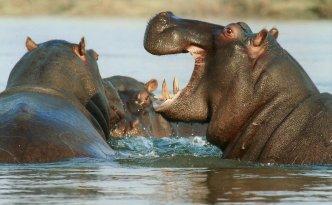 Le safari dans un Afrique du Sud