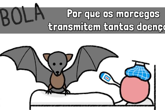 Minuto da Terra: Por que os morcegos transmitem tantas doenças?
