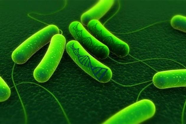 Bactérias são transformadas em HDs vivos