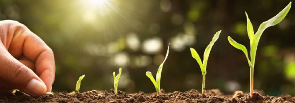 O que você sabe sobre química do solo? – Parte 3