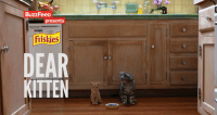"Purina's ""dear Kitten"" Video collection Proves BuzzFeed Is The Cat's Pajamas For content material entrepreneurs"