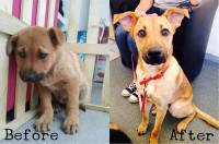 images Of dogs sooner than And After Their Adoption. investigate cross-check These Breathtaking Transitions