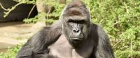 Stop Mommy-Shaming Over the Gorilla Incident