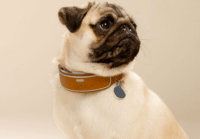 Smart dog collars could be the next big thing in wearables