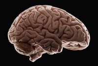 Spaceflight changes the shape of the human brain