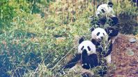 How I Got My Dream Job Traveling The World And Taking Care Of Pandas