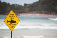 Drones will watch Australian beaches for sharks with AI help