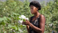Timberland Is Helping Rebuild Haiti's Cotton Industry