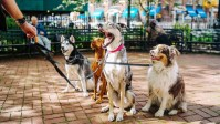 With a $5 million investment, the dog-walking app wars are heating up