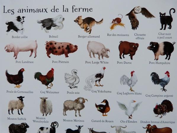 1000 animaux en images 037