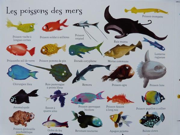 1000 animaux en images 039
