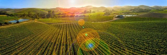 Viñedos en Napa Valley. Fuente [en línea]: wineandmusic.com