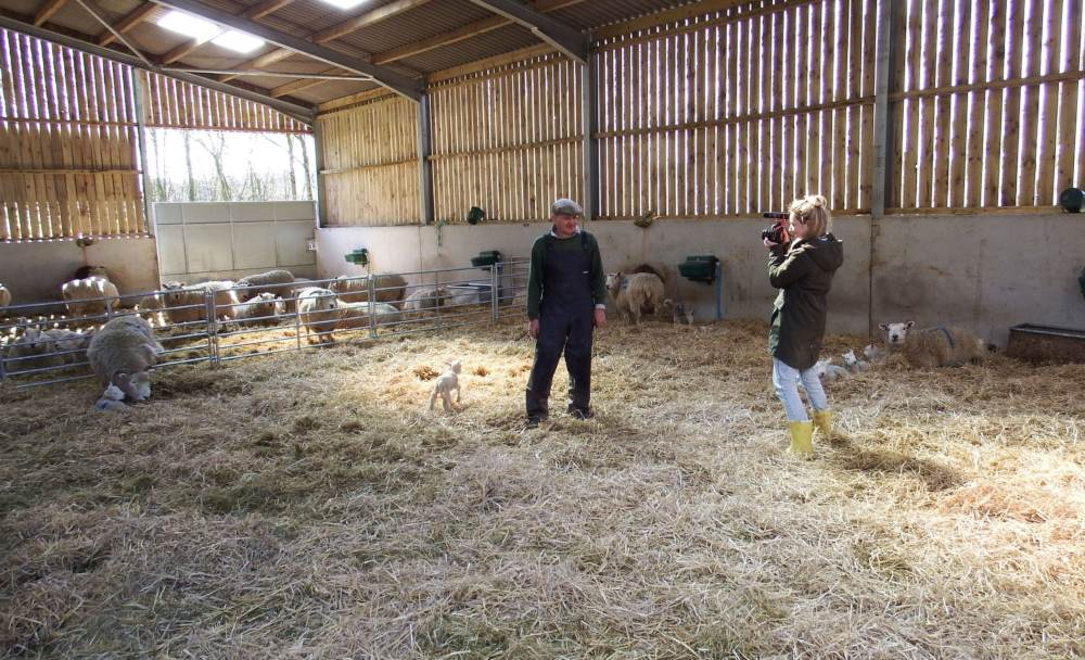 a woman takes a picture of a man in a barn with sheep