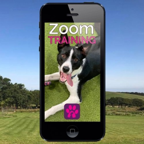 zoom training call