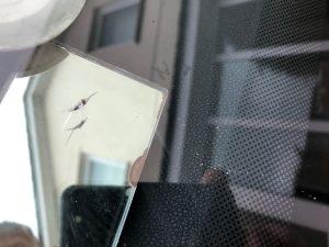 VW Tiguan Windscreen Chip Repair