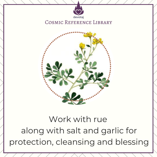Rue: Work with Rue along with salt and garlic for protection, cleansing, and blessing