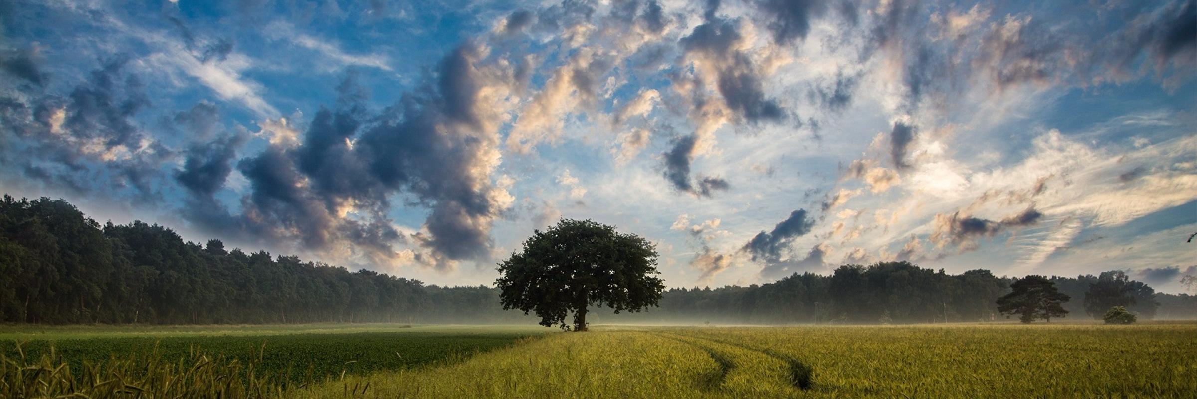 tree-247122