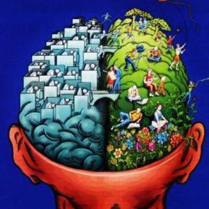 afbeelding-hersenen-bd
