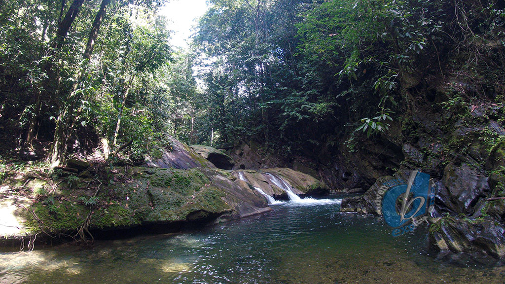 Aripo Lower Waterfall and River