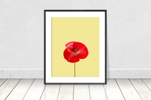 Red Poppy on Yellow Background
