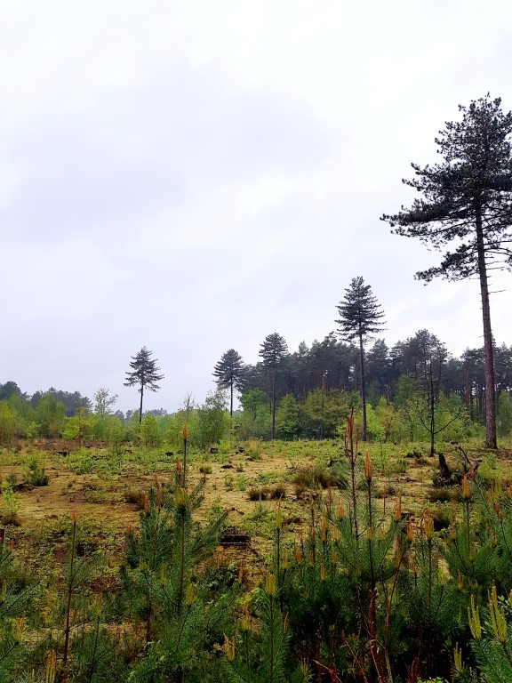 Wandeltips voor in de herfst