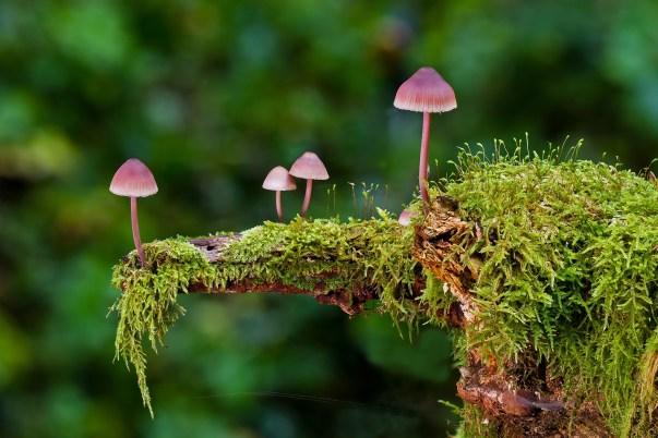 Ontdek de weldaad van het bos - Zakboek voor het bosbaden